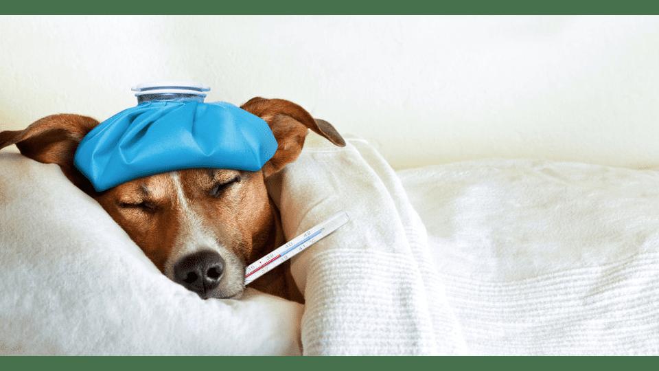 Vickie Luna - Pet Healing Workshop